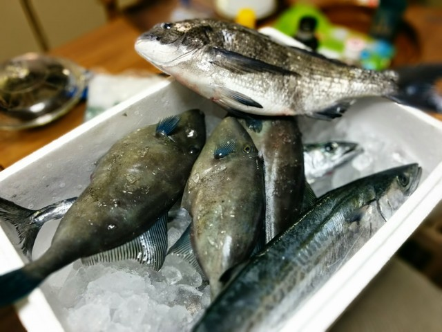 新鮮なカワハギなどの魚
